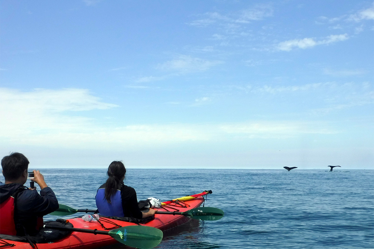 kayaking pacific ocean